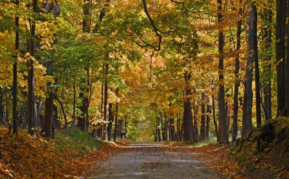 APAB_Autumn_L